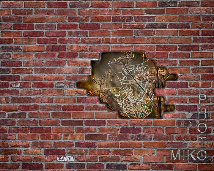 Brick Wall with spiderweb in hole
